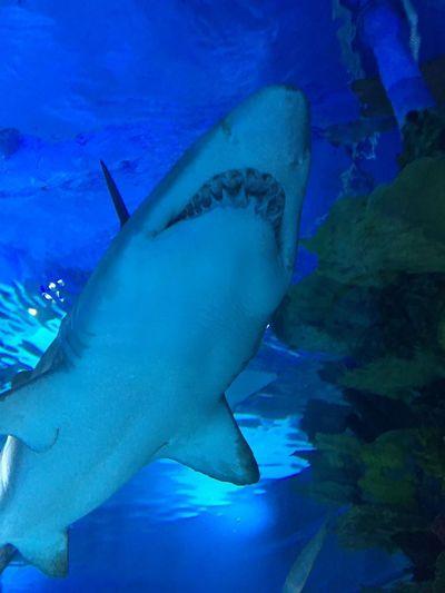 Underwater Sea Blue Swimming Fish Shark Animals In The Wild UnderSea Water Sea Life Marine Nature