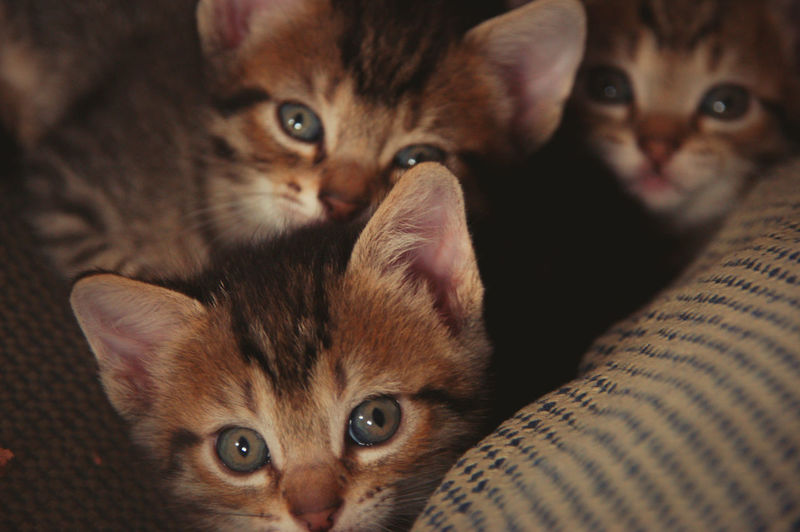Lucky's three kittens. Life goes on. Animal Animal Eye Animal Head  Animal Themes Cat Domestic Domestic Animals Domestic Cat Feline Indoors  Kitten Looking At Camera Mammal No People One Animal Pets Portrait Relaxation Vertebrate Whisker Young Animal