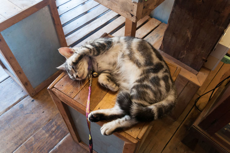 Animal Animal Themes Cat Citty Citty Cat Domestic Animals Domestic Cat Mammal No People One Animal Pet Pets Sleep Sleeping Wood Wood - Material Wooden Table