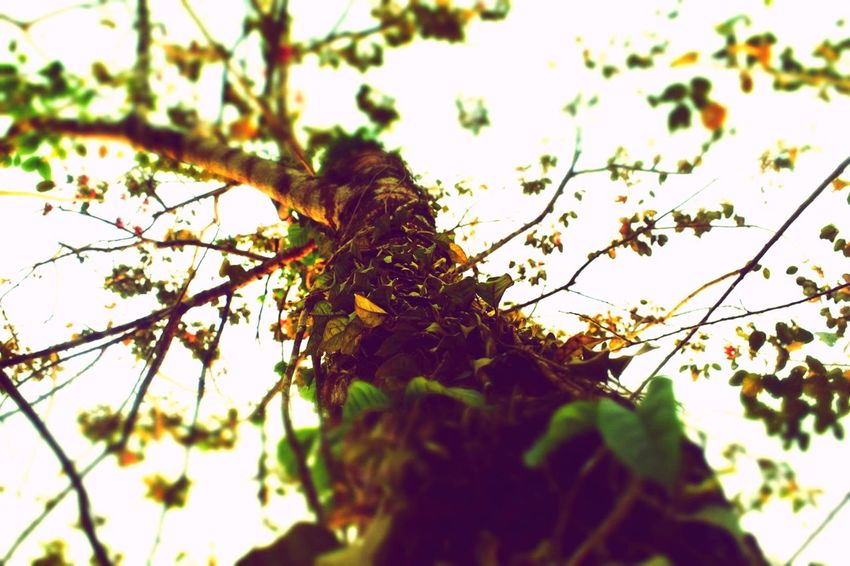 Plant Growth Tree Branch Nature Low Angle View No People Beauty In Nature Outdoors Tranquility