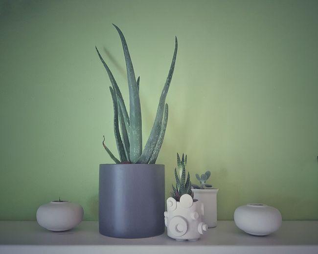 | Cactus | EyeEmItaly Flower Gray Background Plant Succulent Plant Aloe Vera Plant Barrel Cactus Aloe