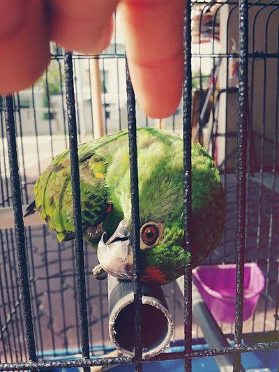 Birds Birdie Birds Of EyeEm  Bird Photography Pets Animals