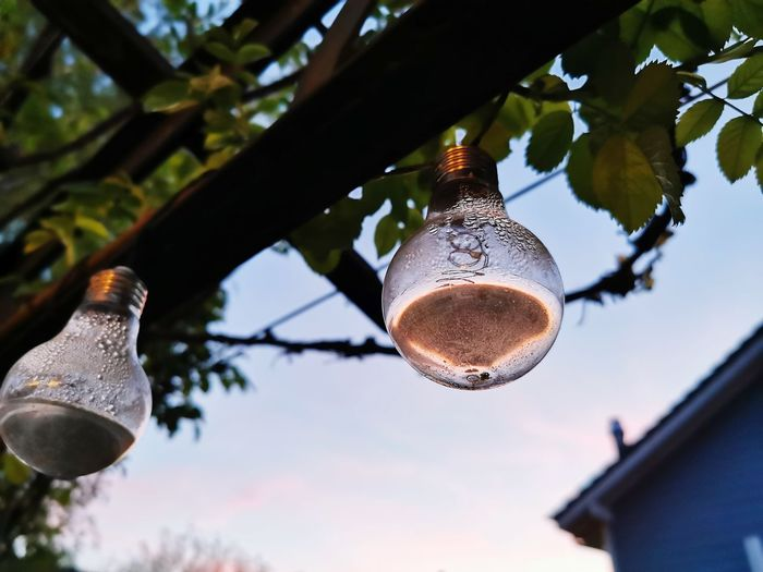 Low angle view of light bulb hanging on tree against sky