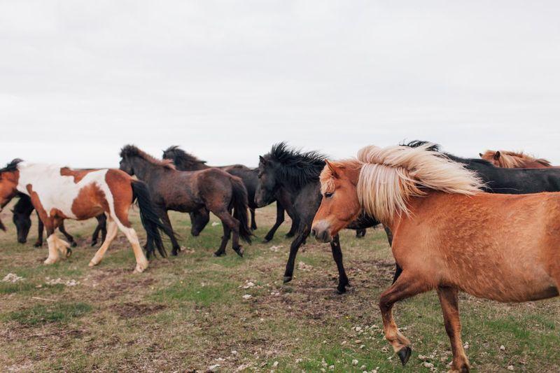 Horses On Landscape Against Sky
