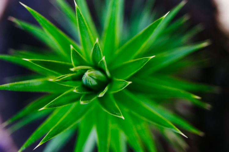Plant Growth Green Color Beauty In Nature Close-up Freshness Nature No People Day Leaf Selective Focus Plant Part Fragility Focus On Foreground Flower Flowering Plant Vulnerability  Outdoors Full Frame Backgrounds