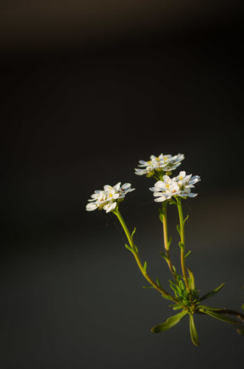 Flower Blossom Plant Flower Head Nature Herb Beauty In Nature