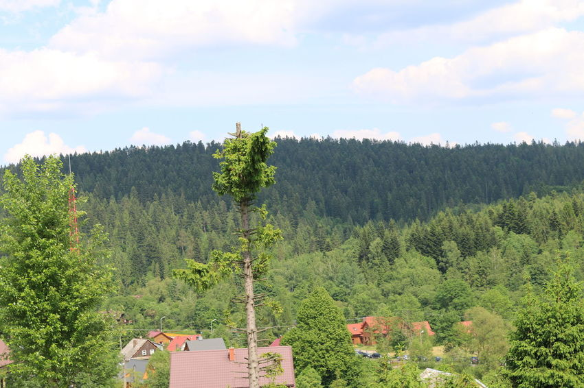 Baumlandschaft Berge Bieszczady Mountains Architecture Beauty In Nature Berglandschaft Built Structure Cloud - Sky Day Environment Forest Green Color Growth Land Nature No People Non-urban Scene Outdoors Plant Scenics - Nature Sky Tranquil Scene Tranquility Tree Waldlandschaft