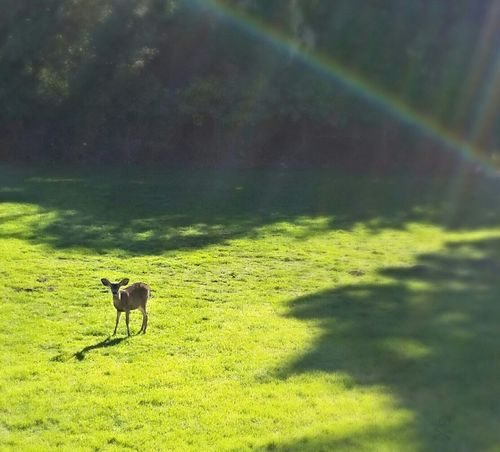 Watching Deer Does Bambi EyeEm Nature Lover Eye4photography  Check This Out Stand Out From The Crowd