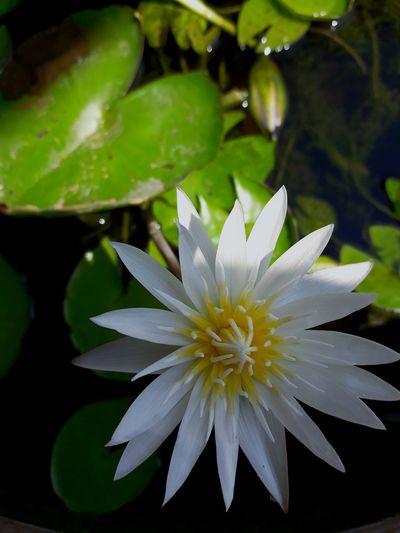 ดอกไม้คืนการดูแลเอาใจก็เหมือคู่รักดูแลกันและกัน #FollowMe Flower Head Flower Passion Flower Water Petal Close-up Plant Plant Life