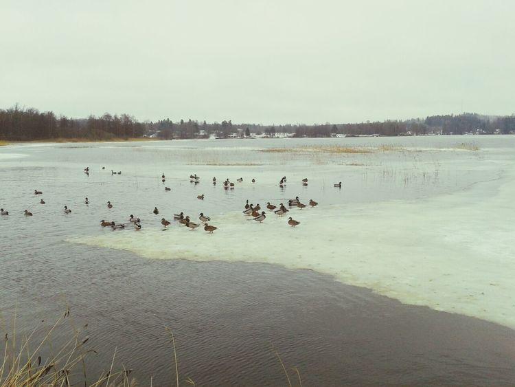 Winter Landscape Landscpape Wintertime In Sweden Sky And Sea