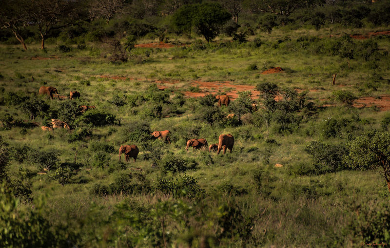 Elephants standing amidst plants on field