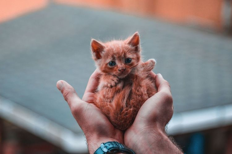 Midsection of person holding kitten