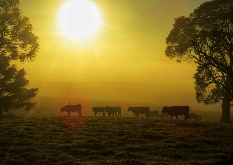 Plant Tree Sky Livestock Sun Mammal Field