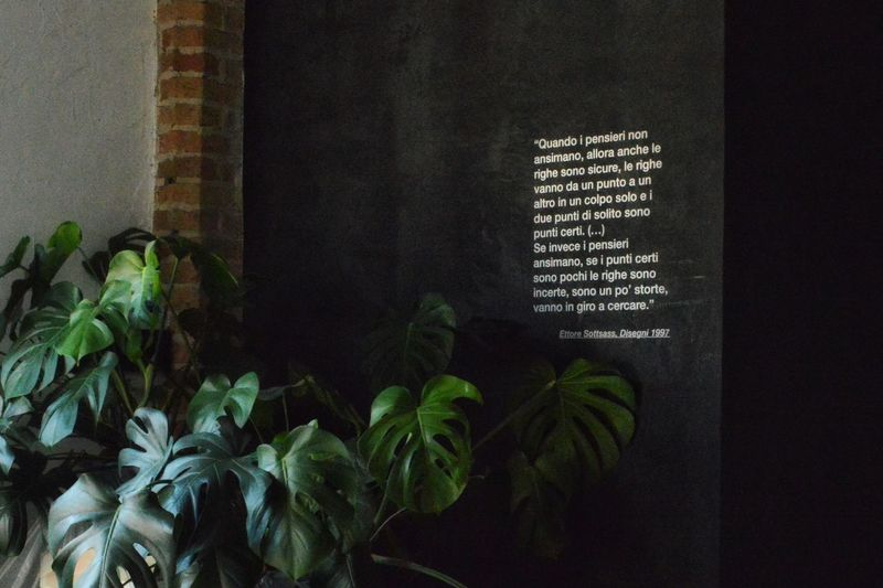 Citazioni Quote Plant Growth Leaf Architecture Text Built Structure Plant Part Communication Green Color No People Nature Wall - Building Feature Building Exterior Western Script Day Pattern Building Low Angle View