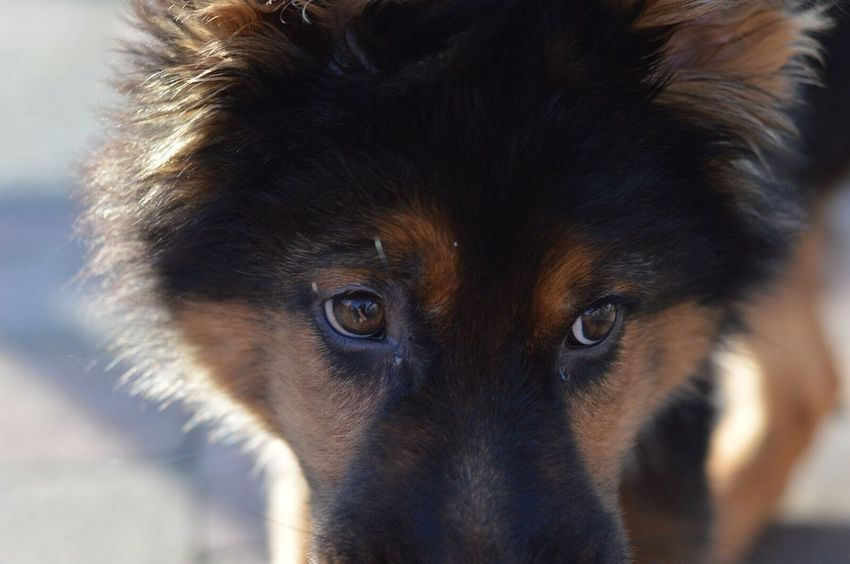 One Animal Looking At Camera Portrait Animal Themes Mammal Close-up Domestic Animals No People Pets Outdoors Day