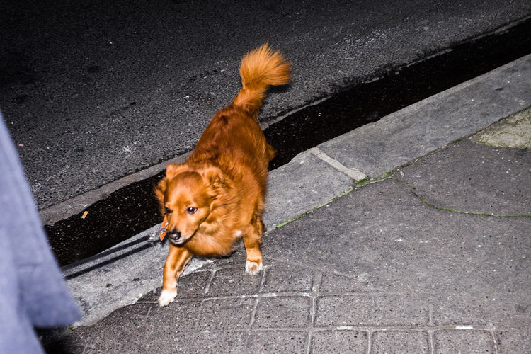 Red Dog Animal Themes Day Dog Domestic Animals Flash Mammal No People One Animal Outdoors Pets Road Street Streetphotography