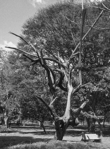 Leisure Activity Life Is Beautiful Tree Oldtree Dry Tree Lifelessness Park Bench Parkbenchthursday Eveningwalk Evening Lights Relaxation