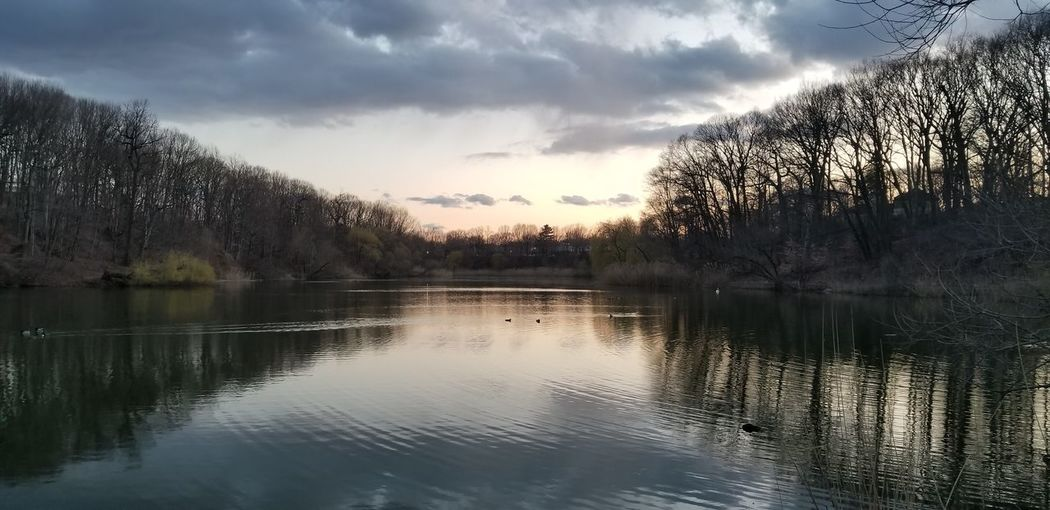 Tree Water Lake Sunset Reflection Sky Cloud - Sky Landscape Reflection Lake