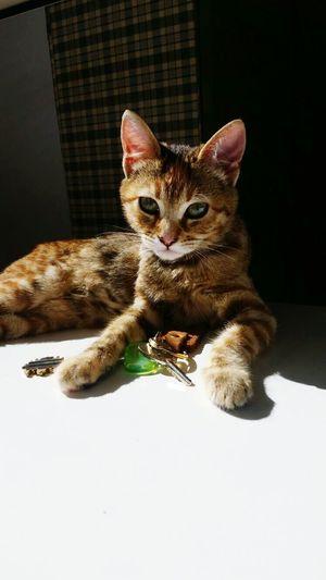 Thatsmine Home Sweet Home Details Love ♥ Me Venere Kittycat Cat Crazy Cat