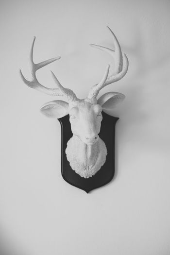 Animal Animal Themes Antler Deer One Animal Indoors  Animal Head  No People Sculpture Wall Decoration Hanging Interior Design Decoration Style