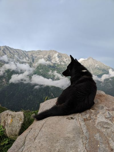 Goodmorning Black Color Clouds And Sky Dog Domestic Domestic Animals Environment Mountain Nature One Animal Pets Rock Scenics - Nature Sitting Sky