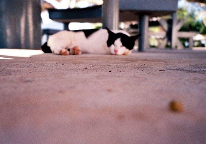 """"""" โฟกัสอะไร ?? """" Camera : Olympus mju 2 Film : Fuji Superia 200 Cat Thailand Afterzero Olympus Mju Mju2 Filmphotography Filmisnotdead Ishootfilm Iusefilm Fujifilm Fuji Superia Film 35mm Analog Buyfilmnotmegapixels"""
