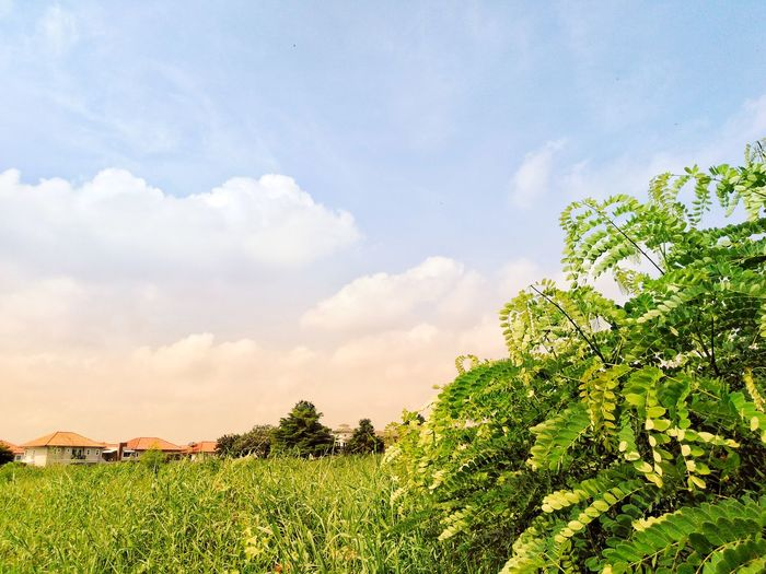 village in garden Grass Village Villa Home House Village Garden Sky Cloud - Sky Cloud Morning Field Green Color Green Tree Plant Home House Rendering Nature Rural Scene Field Agriculture Sky Close-up Plant Cloud - Sky Green Color Blooming