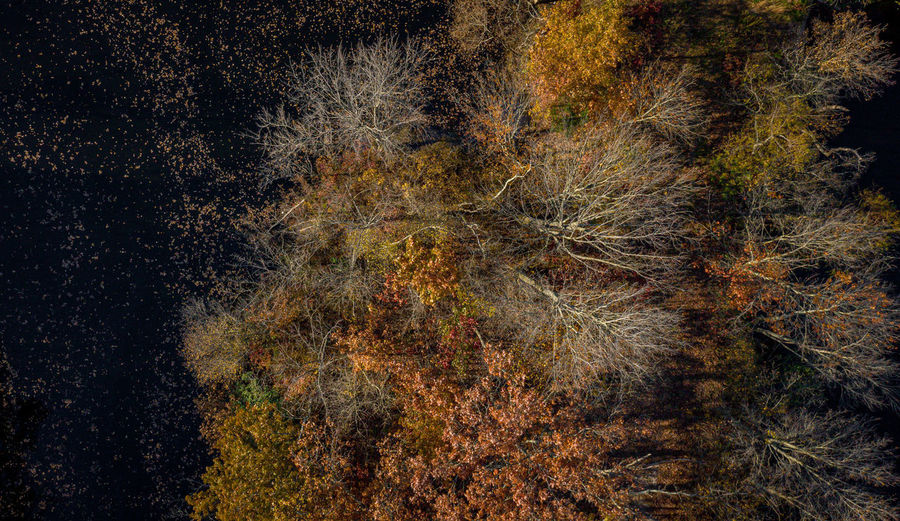 Firework display in forest during autumn
