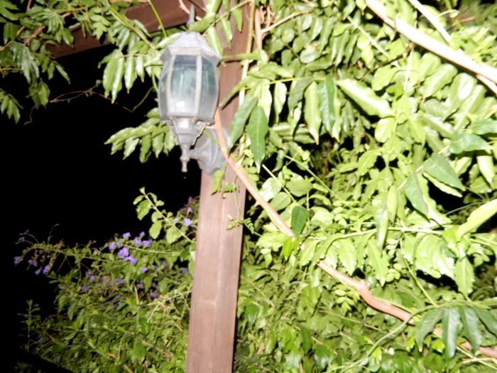 Nighttime Photography Experiment Moonlight Spain♥ Foliage Comes Alive