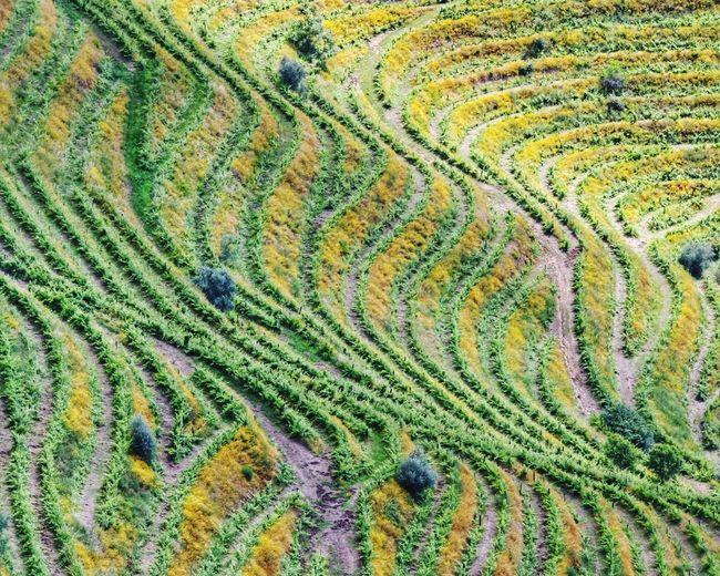 Full frame shot of agricultural field
