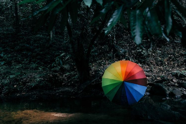 Tree Multi Colored Plant Umbrella Protection Nature Water Forest Tree Trunk Outdoors Beauty In Nature Rain Lifestyles Rainforest Flowing Water Stream Drizzle Jungle Dark Forest