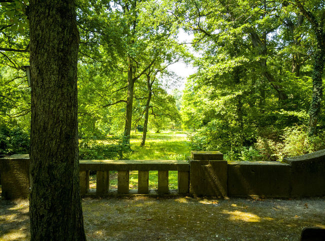 Beauty In Nature Bench Day Forest Green Color Growth Land Landscape Nature No People Outdoors Park Plant Sunlight Tranquil Scene Tranquility Tree Tree Trunk Trunk Wood - Material WoodLand