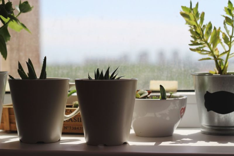 Plant Potted Plant No People Nature Succulent Plant Table Growth Cactus Close-up Home Interior Focus On Foreground Day Indoors  Window Green Color Beauty In Nature Houseplant Still Life Side By Side Glass Adventures In The City Focus On The Story