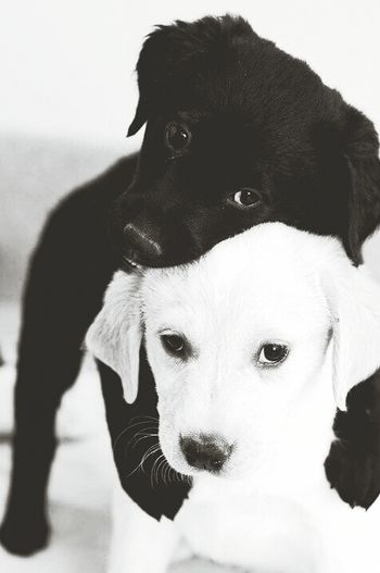 Puppy Puppy Love Dogs Cute as a bun!!! Blackie and Frost!! <3