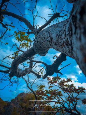 Photography Tree Plant Branch Nature Growth Sky The Great Outdoors - 2018 EyeEm Awards Trunk Sculpture Tree Trunk Plant Part Representation Beauty In Nature Blue Architecture Outdoors Day Cloud - Sky No People Low Angle View Leaf