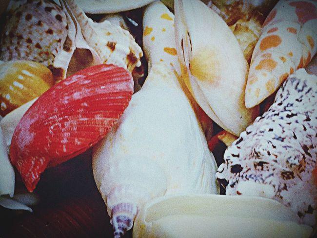 Lieblingsteil Mussels Muscheln Mussles Beach Photography Beach Beachlife Sand