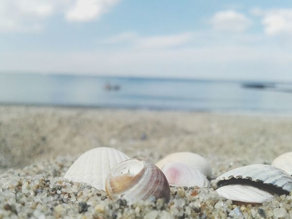 A bunch of shells in the sand Soaking Up The Sun EyeEm Nature Lover The Environmentalist – 2014 EyeEm Awards The Devil's In The Detail