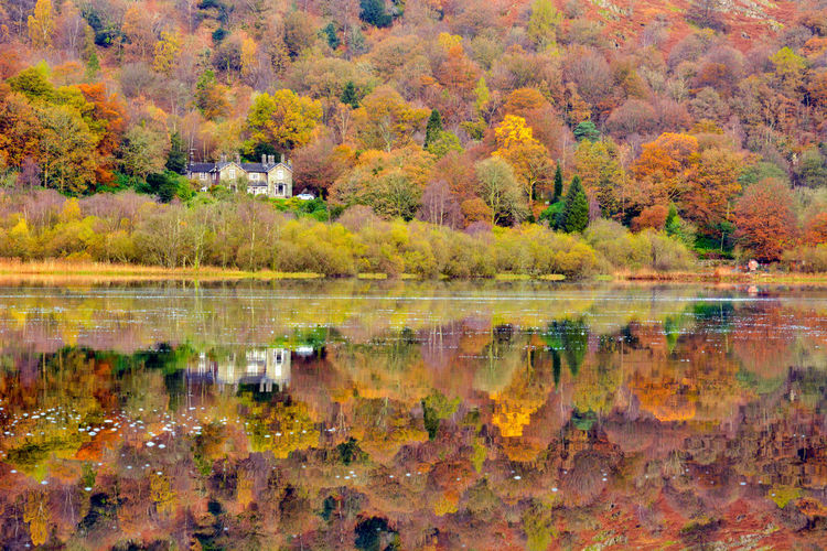 Autumn Colours Reflection Autumn Colours Reflecting Autumn Colours In Winter Autumn Colours... Grasmere Grasmere Water Grasmere Lake Autumn Autumn Colours Autumn Colours, Beauty In Nature Forest Lake Multi Colored Nature Red Reflection Tranquil Scene Water