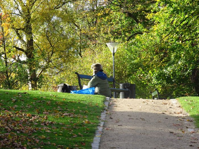 Living In The Park Park Life Sitting Outdoors Green Color Tree Autumn Colors Copenhagen, Denmark People And Places People People In The Park Homeless Homeless People Homeless Awareness
