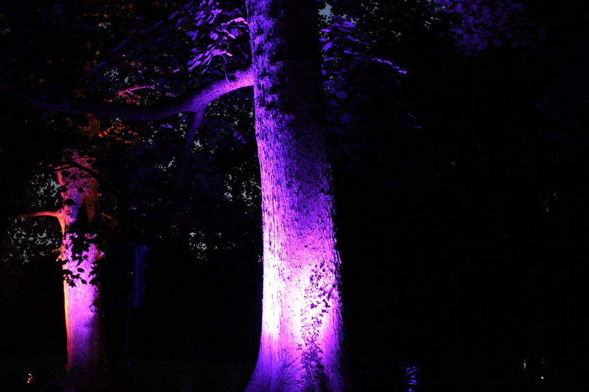 Dark Darkness And Light EyeEm Gallery EyeEm Illuminated EyeEm Nature Lover Illuminated Learn & Shoot: After Dark Lichtspiele Light Light Night Nightphotography Non-urban Scene Outdoors Poesie Des Lichts Schloss Dyck Tranquil Scene Tranquility Tree TreePorn Vibrant Color