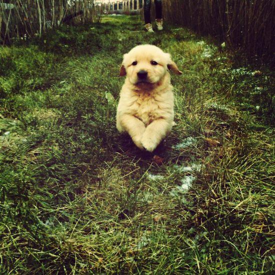 I Love My Dog Dog Retriver Dogs Of EyeEm