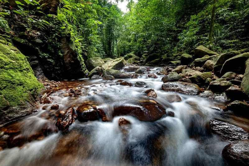 beutifull Water Motion Nature Tree Plant Beauty In Nature Day Flowing Water Forest Outdoors Green Color Land Waterfront