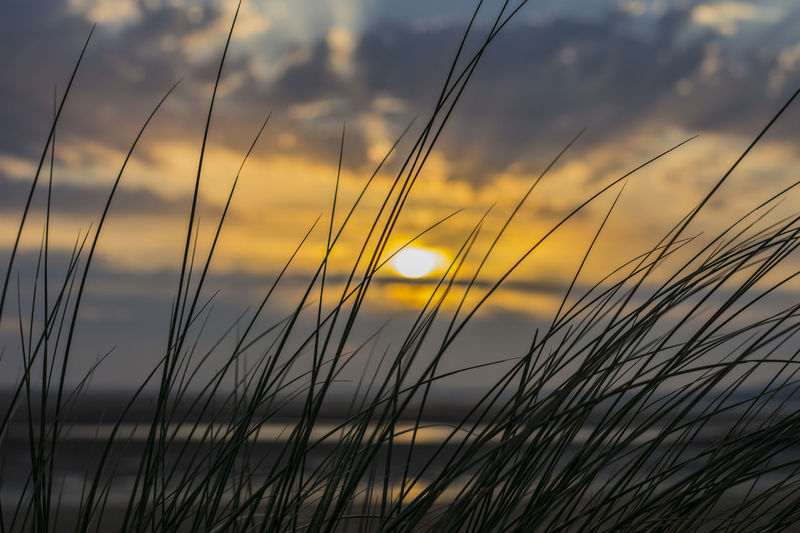 Sunset Tranquil Scene Scenics Beauty In Nature Growth Tranquility Plant Sun Silhouette Nature Grass Close-up Water Idyllic Cloud Sky Vibrant Color Focus On Foreground Atmosphere Non-urban Scene