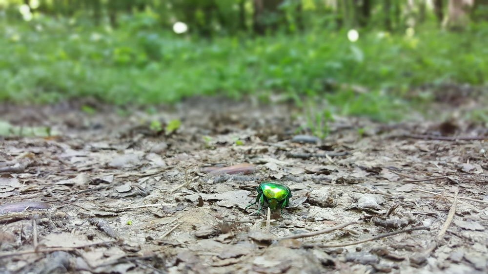 Bug Forest Fruška Gora Green Bug Trail Forestwalk Colourful Ground Forrest Trail