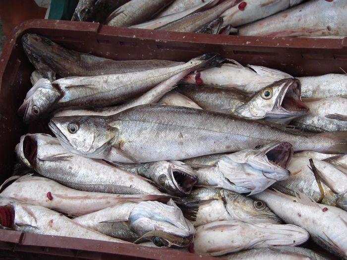 Fish Fish Food Market Seafood Fish Market Sea Sea Life
