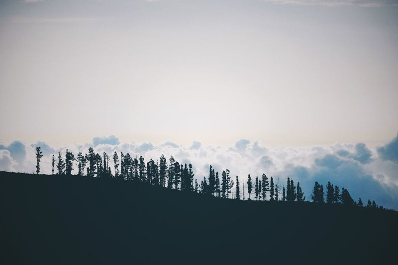 Sky Nature Beauty In Nature No People Tree Scenics - Nature Environment Landscape Outdoors