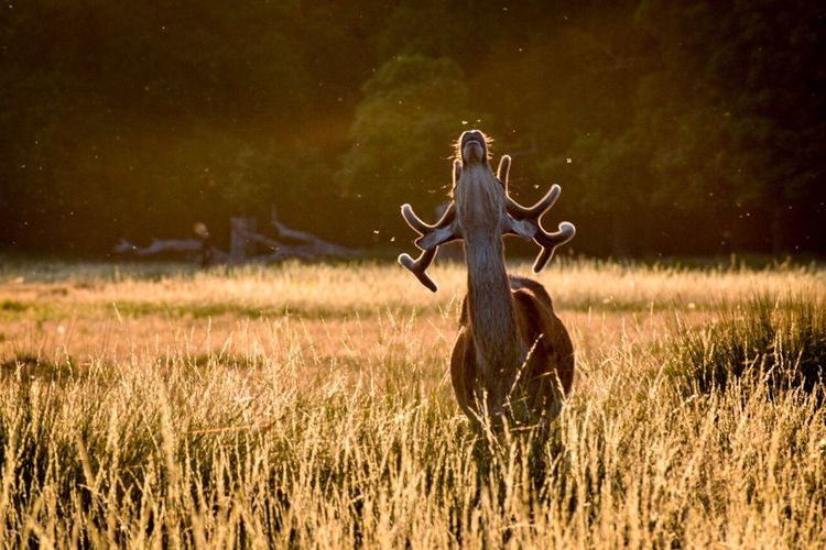 Antler Animal Wildlife Animal Themes Outdoors Stag One Animal Mammal Animals In The Wild Beauty In Nature First Eyeem Photo