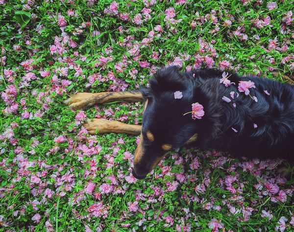 Nature Outdoors Italy Domestic Animals Flower Pets Dog Beauty In Nature Petals Spring