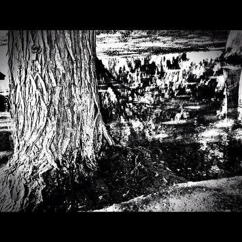 Found at my bank Trees Blacknwhite Mcallen Landscape
