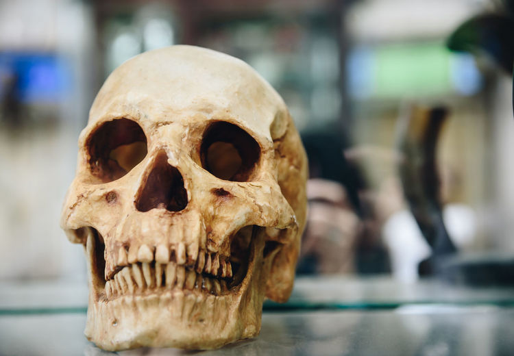 A scary skull placed on the glass. Animal Skull Bone  Close-up Day Focus On Foreground Human Bone Human Skeleton Human Skull Indoors  Skeleton Skull